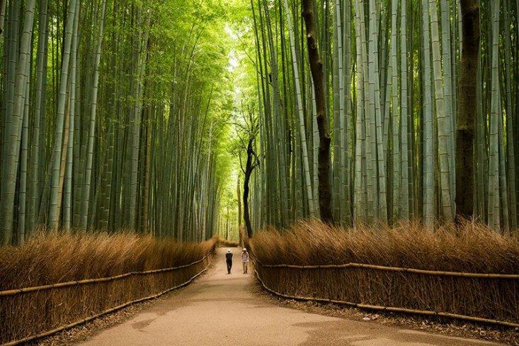 Бамбуковая роща Сагано, парк Арасияма на юго-западе префектуры Киото