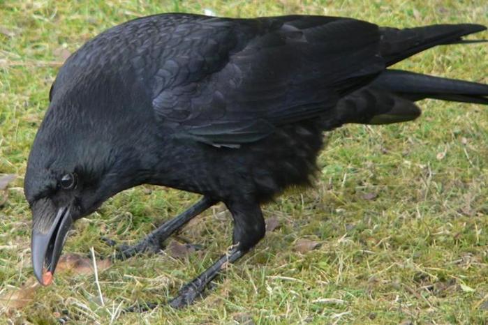 Список грозных птиц, самых опасных для человека