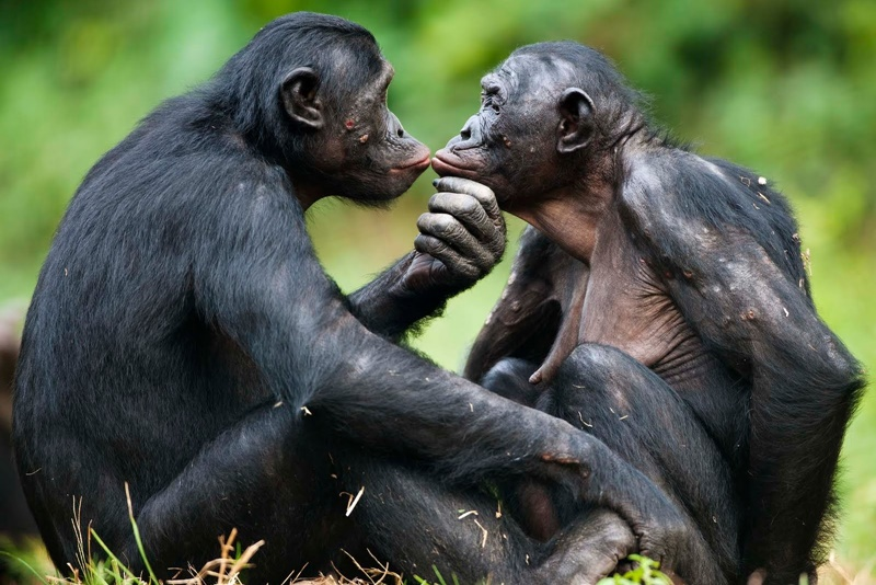 10 животных с нетрадиционной сексуальной ориентацией