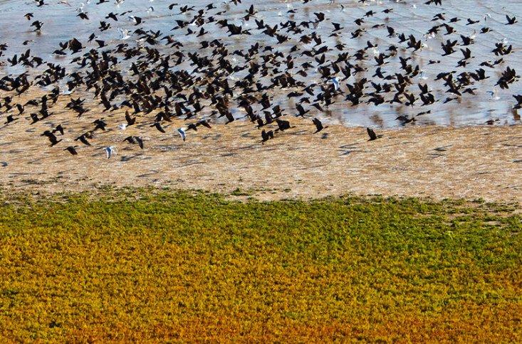Птицы на берегах озера Маныч-Гудило. Калмыкия