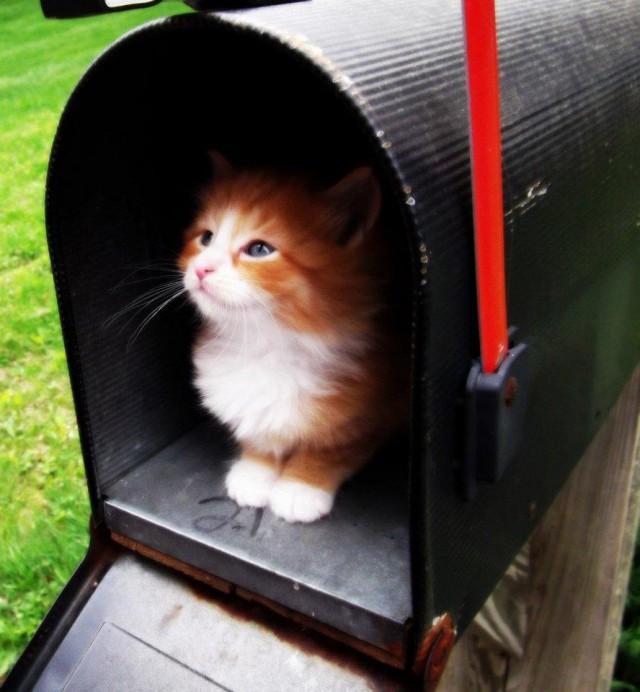 Почтовые кошки в Бельгии