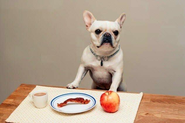 Бекон не причинит собаке вреда