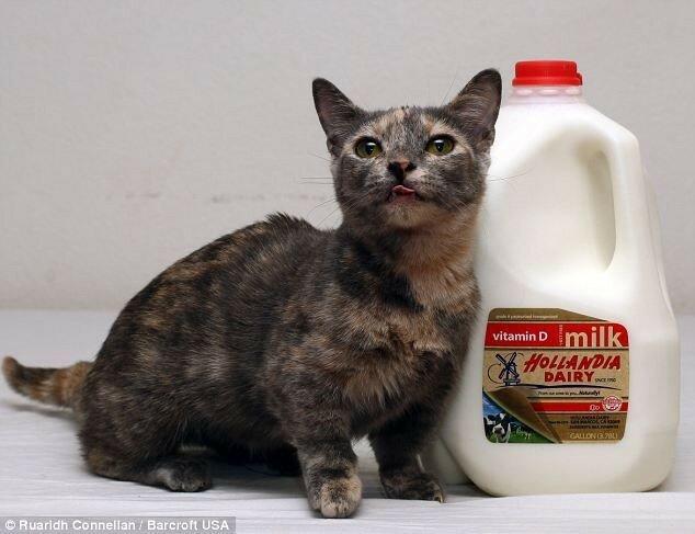 Самый маленький кот в мире— звезда Интернета