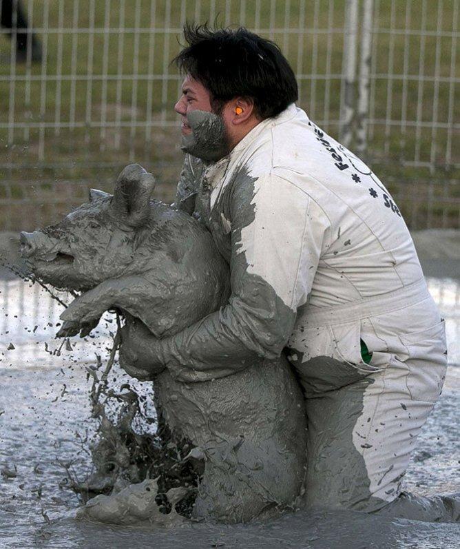 Фестиваль свиней в Квебеке: борьба в грязи