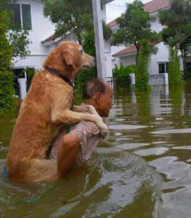 Любить— это значит действовать! Фото, как люди спасают животных