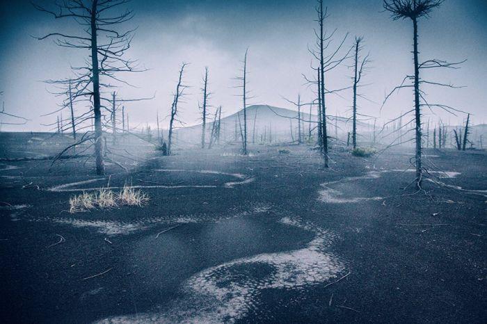 Ночной ливень в мертвом лесу.