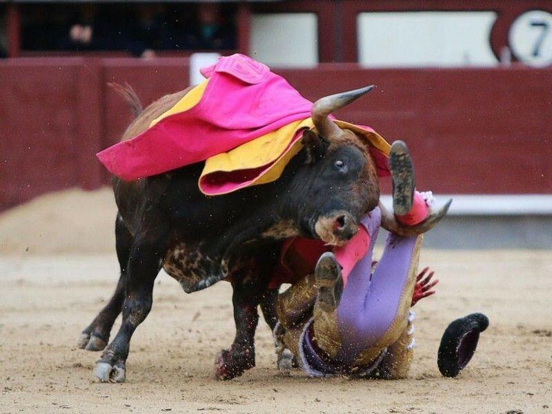 Коррида запрещена: как Испании впервые за 35 лет прекратили бой быков