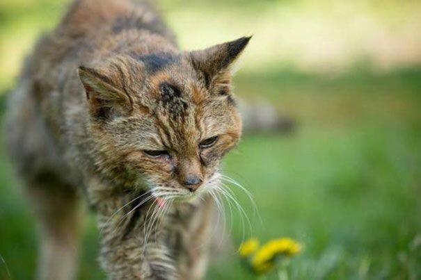 Самая старая кошка в мире (Крим Пафф, 1967—2005)— рекорды животных