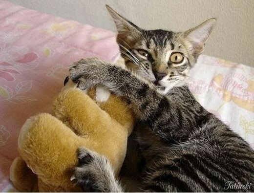 Коты и мягкие игрушки: самые милые фотографии