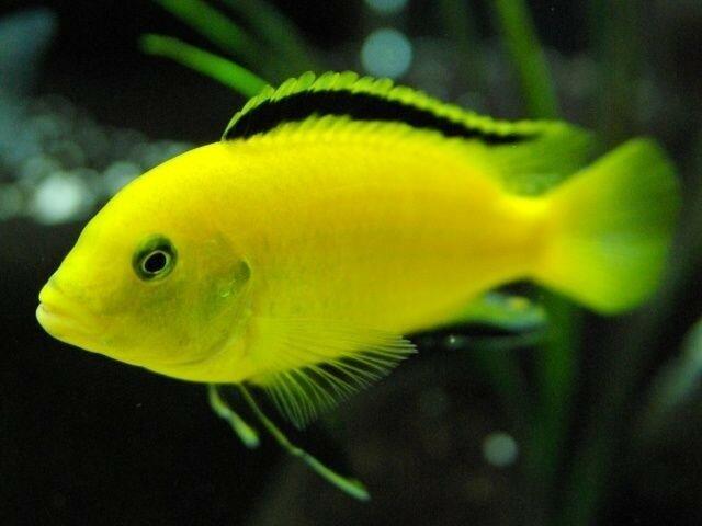 Аквариумные рыбки оказались намного умнее, чем считалось раньше