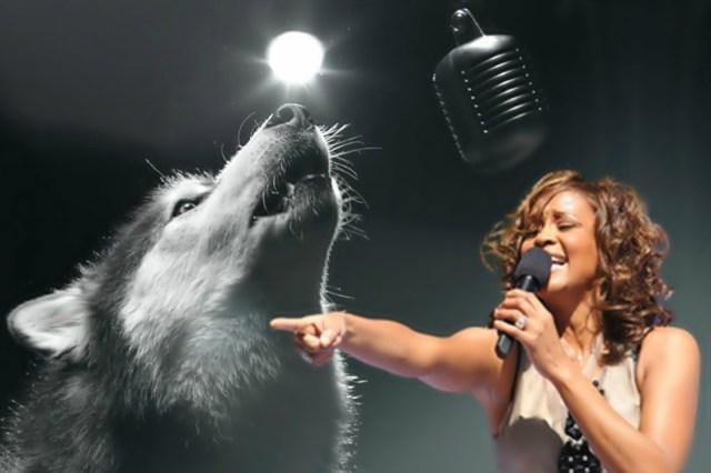 Видео, как собака поет песню Уитни Хьюстон на конкурсе талантов