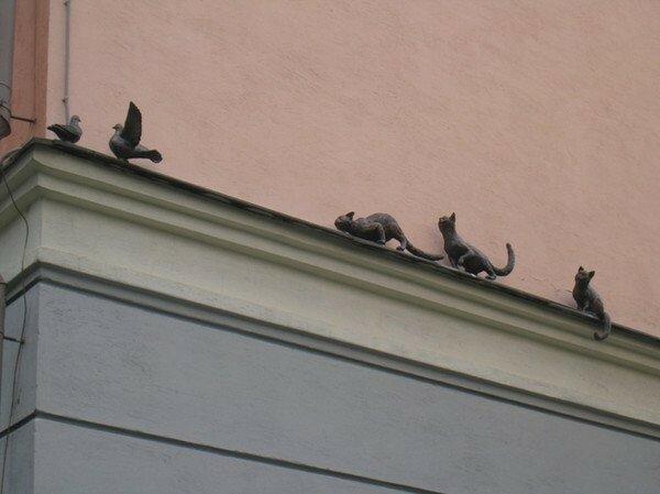 Памятник кошкам и голубям, Нижний Новгород