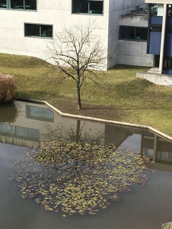 Идеальное отражение дерева