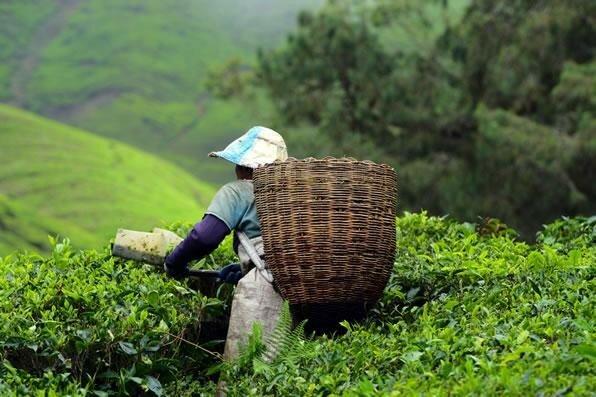 Как чашечка чая смогла изменить ход истории