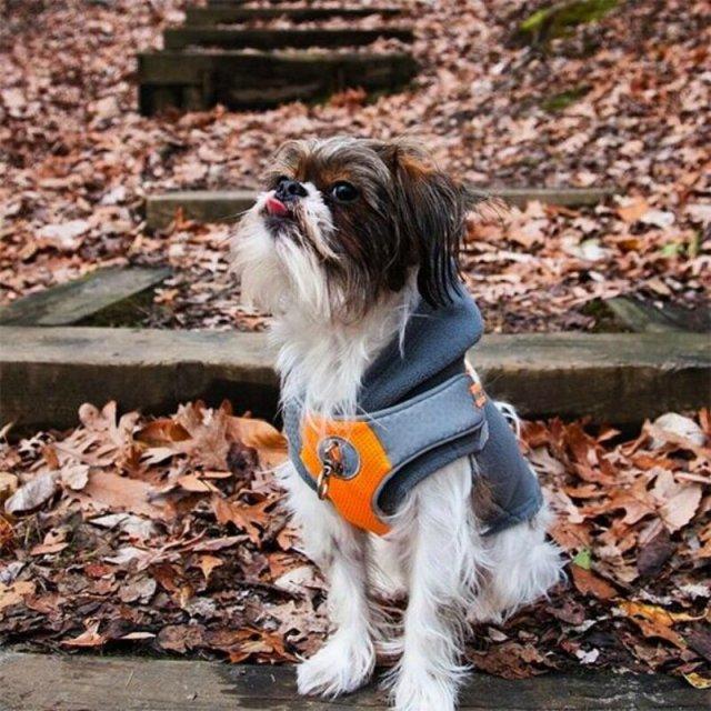 Сколько стоят 10 популярных дизайнерских пород собак