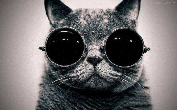 Как кошки видят наш мир: Николай Ламм сравнил фотографии
