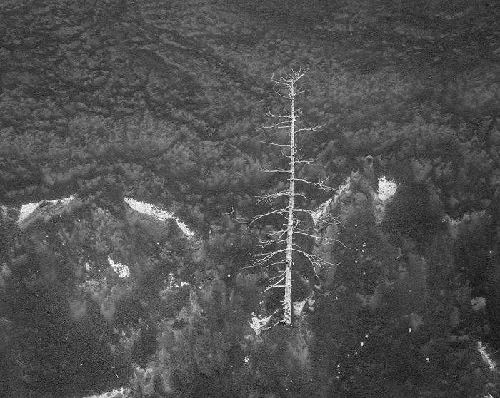 Одинокое дерево, выросшее на отвесном склоне старого кратера.