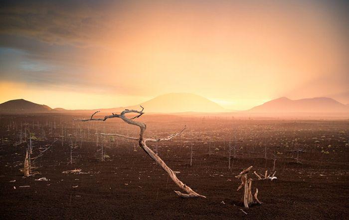 Мелкие капли дождя, отражая лучи заходящего солнца, заливают долину мертвого леса светом.
