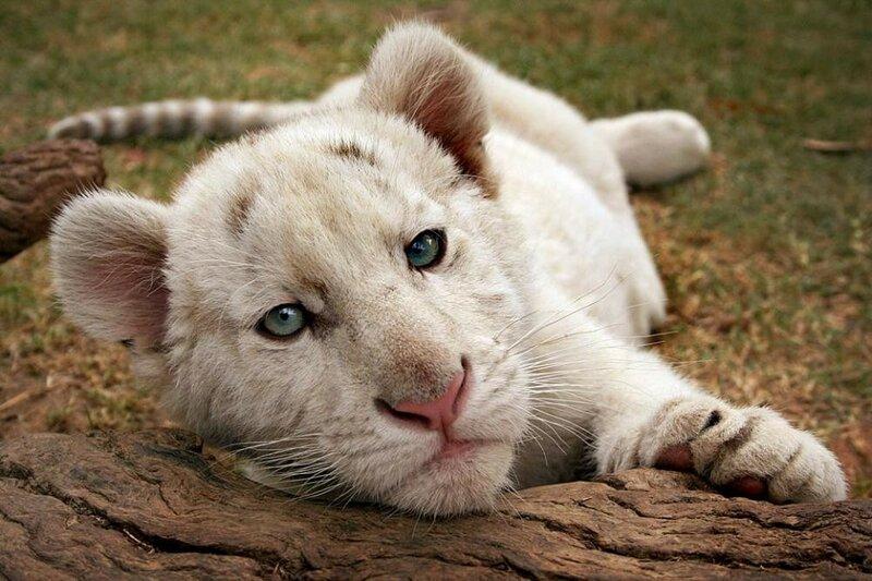 Животных на планете стало в два раза меньше