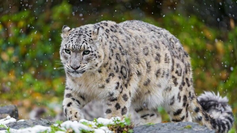 Дикие красавцы! Самые красивые животные мира