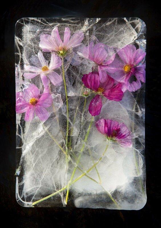 Завораживающая красота ледяных цветов