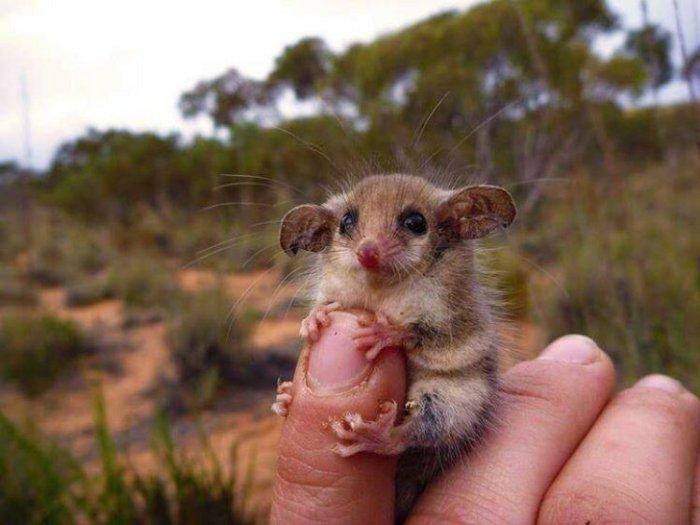 Милые фотографии! Топ 20 самых маленьких зверят