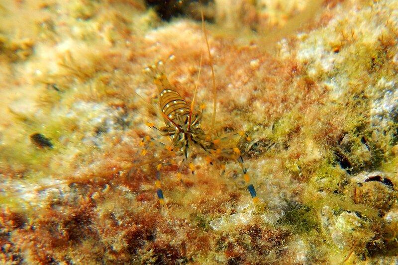 Συνδέστε τις ζωντανές γαρίδες