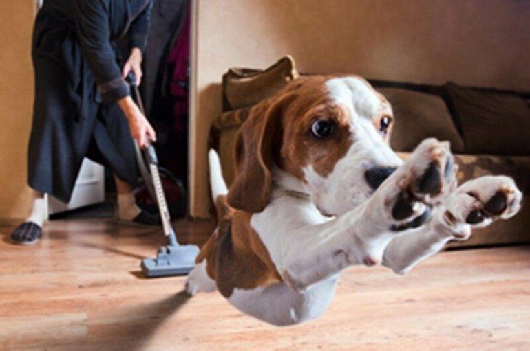 Собака и пылесос: смешное видео о домашних питомцах