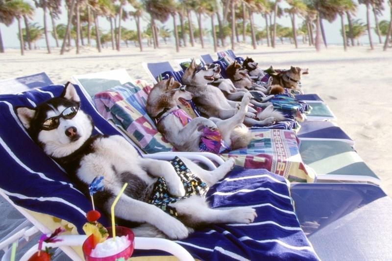 20 животных, которые провели лето лучше, чем люди