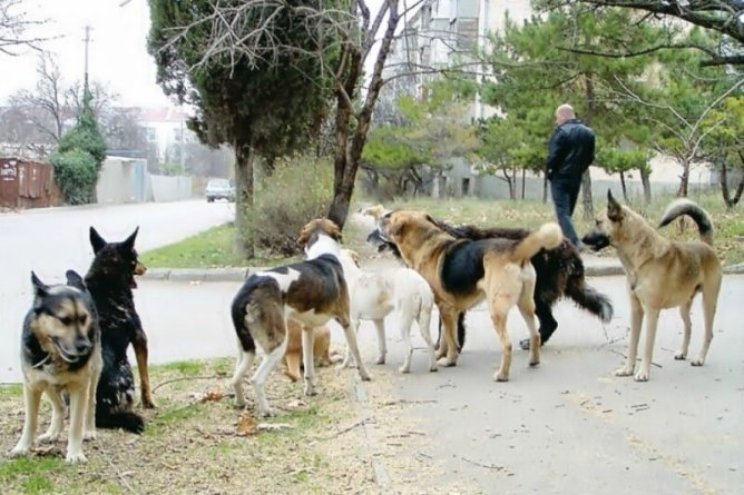 Как справиться с бродячей собакой: защита от собаки