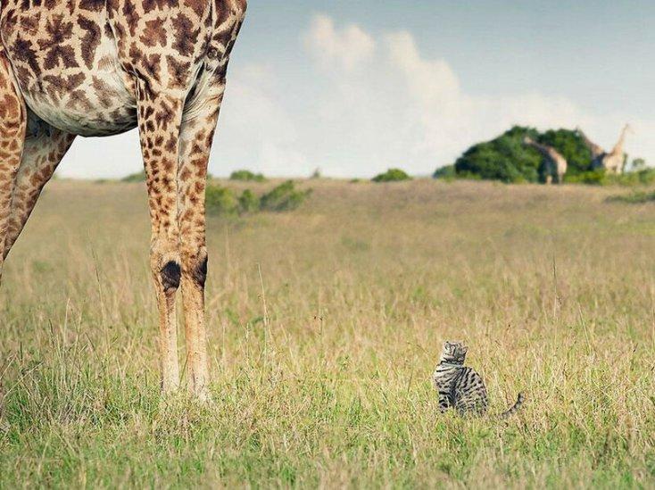 Приключения полосатого кота в Африке