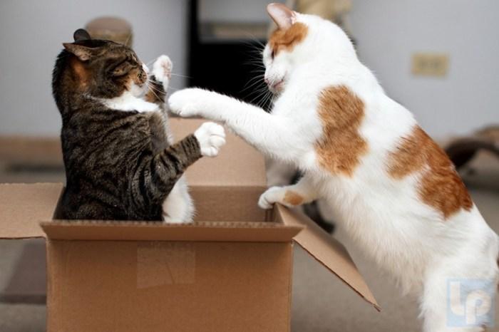 Как спасти квартиру от хаоса, если у вас поселился котик