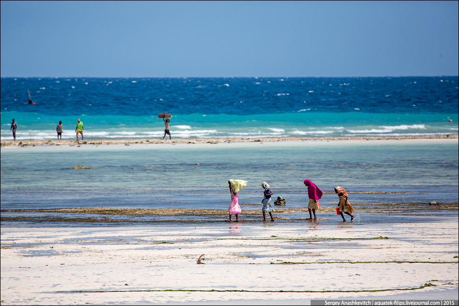 Shellfish pickers in Zanzibar