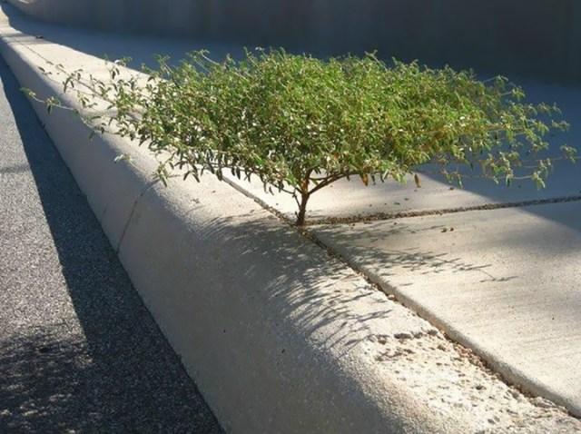 Жизнь найдет выход! Фотографии растений, которые не сдаются