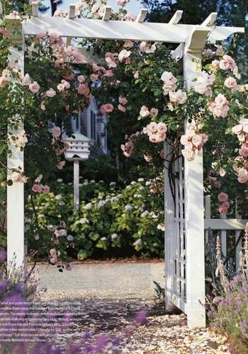 пергола с розами