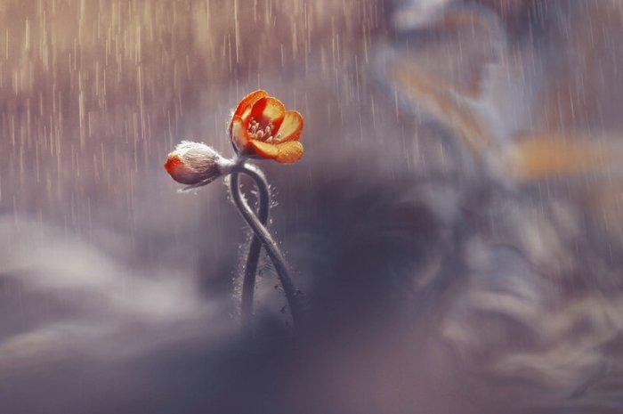 Двое под дождем и др. или серия в золотых тонах