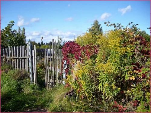 Работы в саду в сентябре