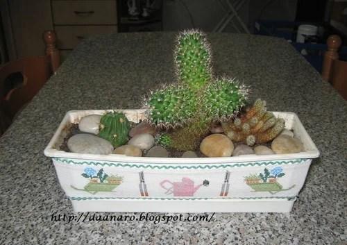 сад из кактусов