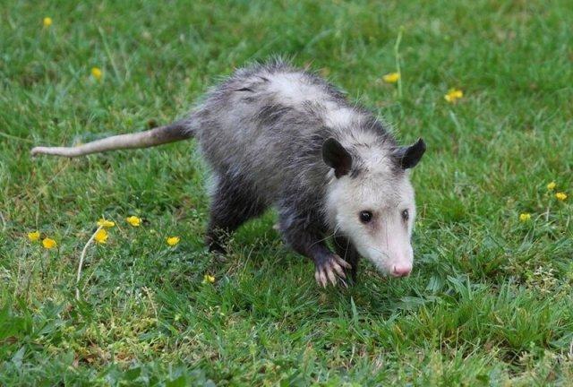 Самые хитрые животные в мире