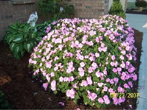 красивый сад с клумбами однолетники в саду фото