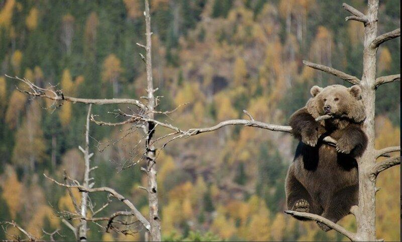 Тайная жизнь хищников в лесах