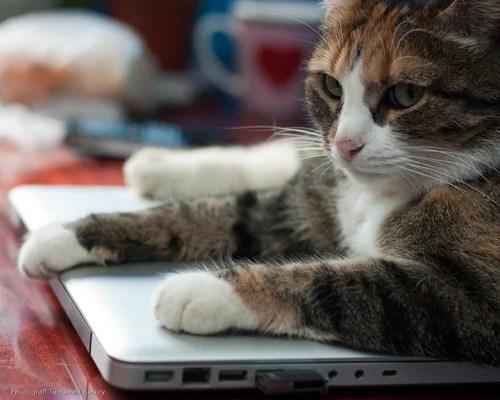 кошка, кошки, машка, животные, домашние животные, фотографии, фотосессии животных