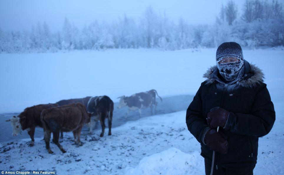 6. Крестьянин Николай Петрович привел своих коров на водопой на узкую полосу термальных вод на краю
