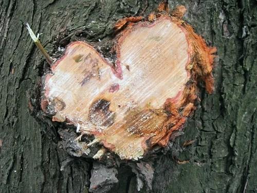 Как обрезать плодовые деревья