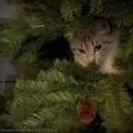 Первая кошка лидер в Яндекс.Фотках у меня.