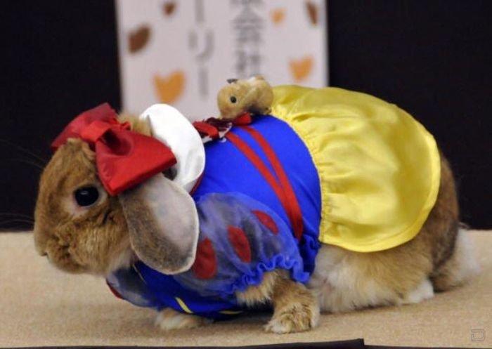 Милые кролики в забавной одежде: модный конкурс