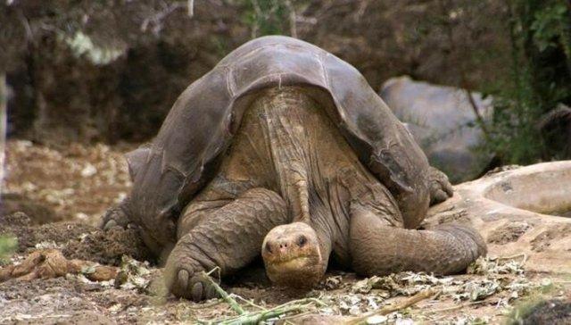 Кто из животных живет дольше 100 лет
