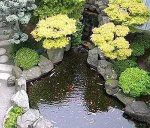 небольшие водоемы в саду