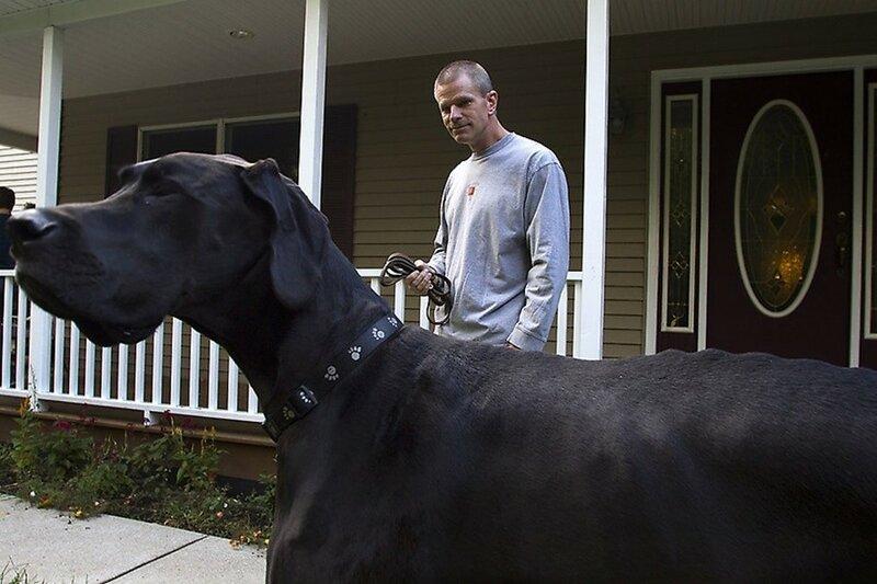 Самые большие породы собак