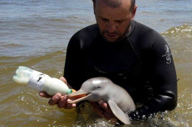 Дельфины являются личностями, по утверждению правительства Индии